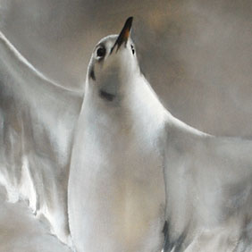 Blackheaded gull painting